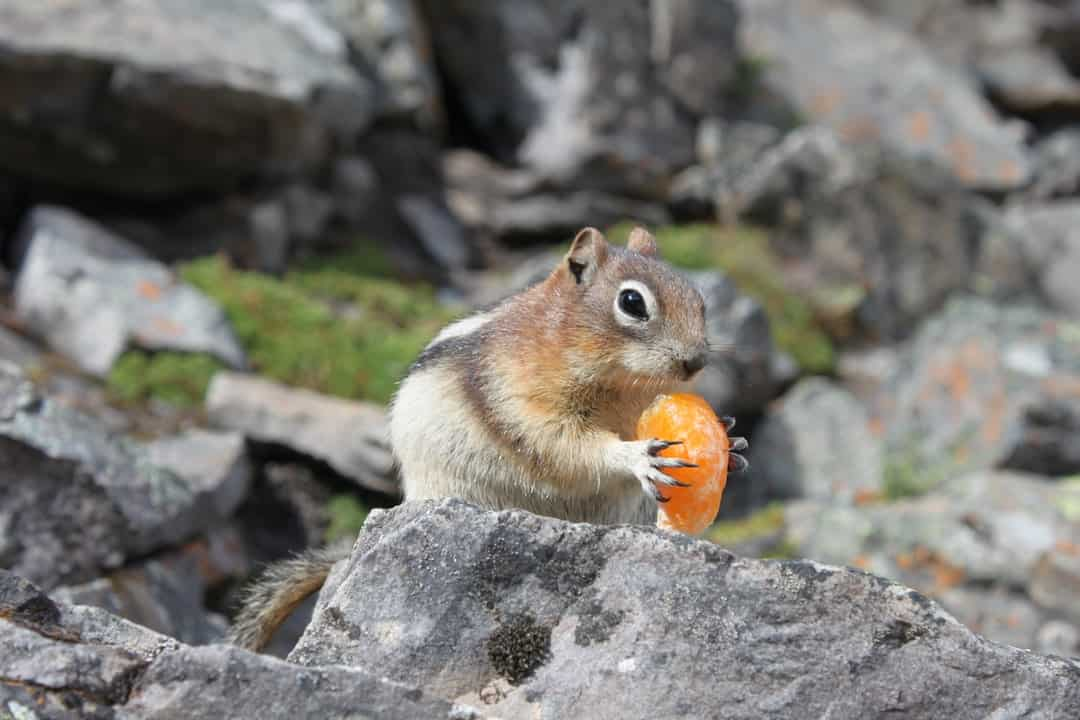 A squirrel standing on a rock